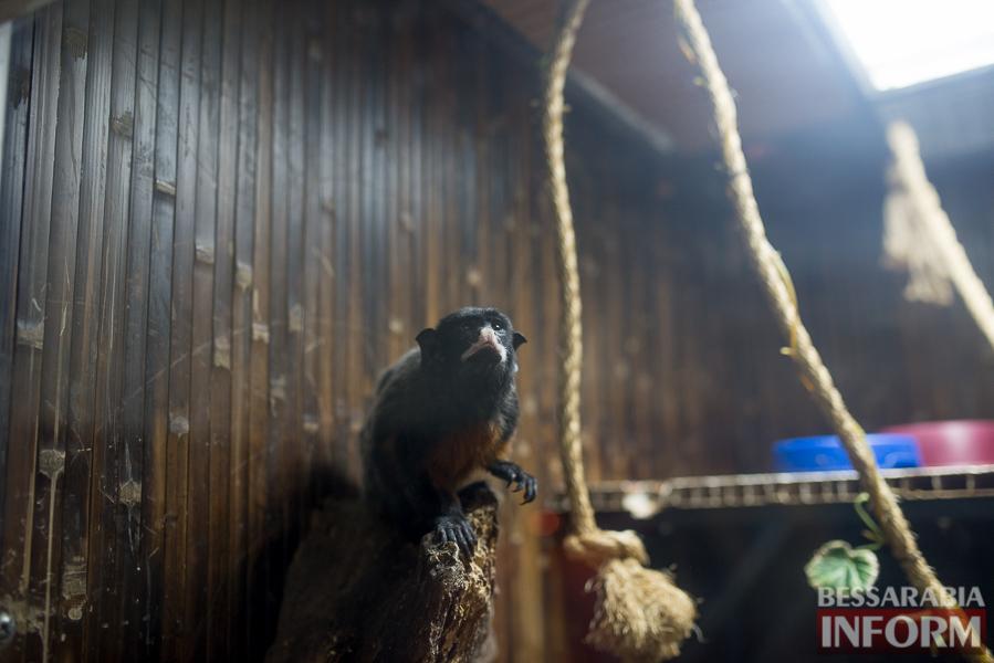 SME_7536 В Измаиле гостят карликовые обезьянки (фоторепортаж)