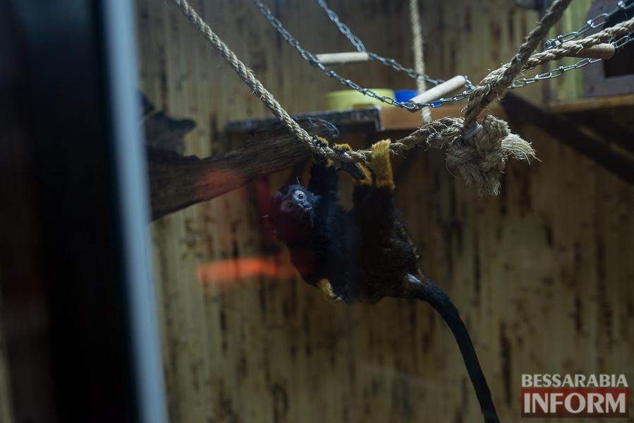 SME_7547 В Измаиле гостят карликовые обезьянки (фоторепортаж)