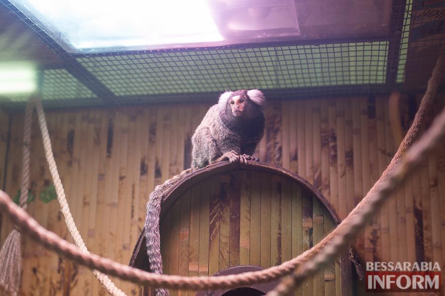 SME_7560 В Измаиле гостят карликовые обезьянки (фоторепортаж)