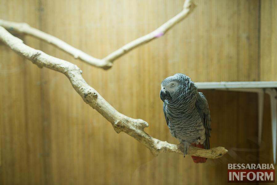 SME_7564 В Измаиле гостят карликовые обезьянки (фоторепортаж)