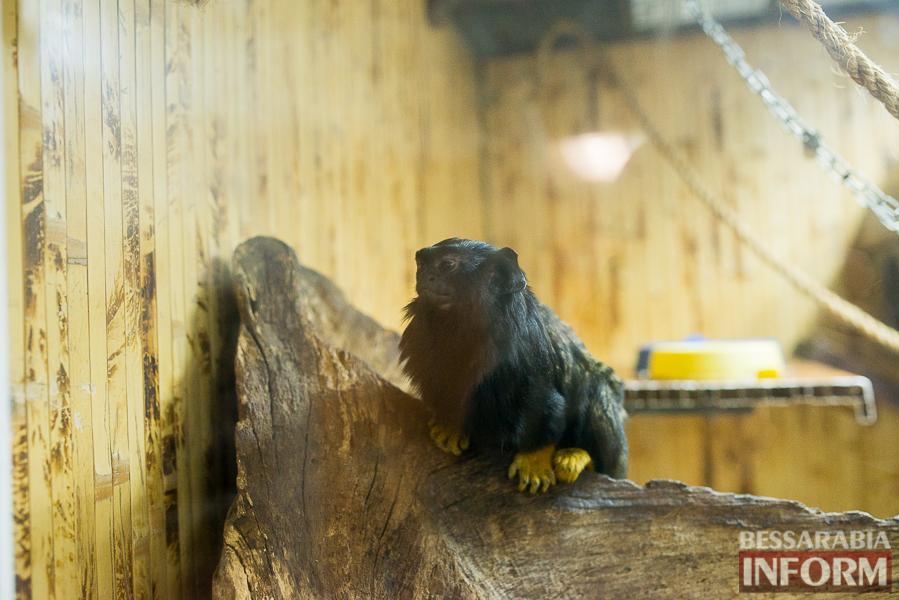 SME_7575 В Измаиле гостят карликовые обезьянки (фоторепортаж)
