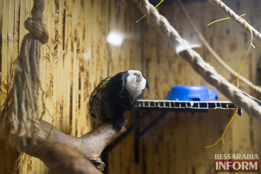 SME_7582 В Измаиле гостят карликовые обезьянки (фоторепортаж)