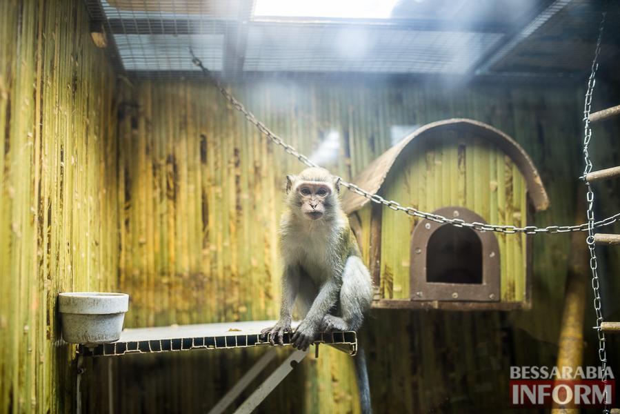 SME_7595 В Измаиле гостят карликовые обезьянки (фоторепортаж)
