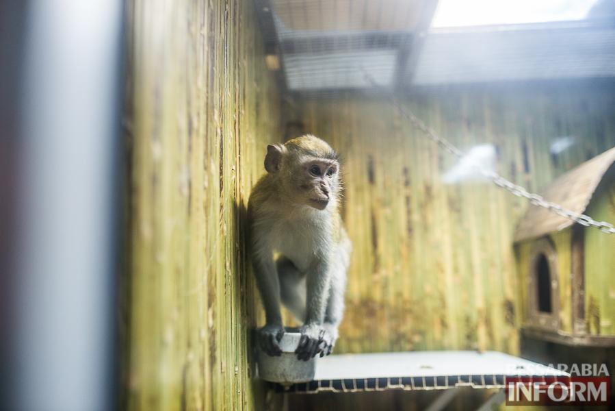 SME_7601 В Измаиле гостят карликовые обезьянки (фоторепортаж)