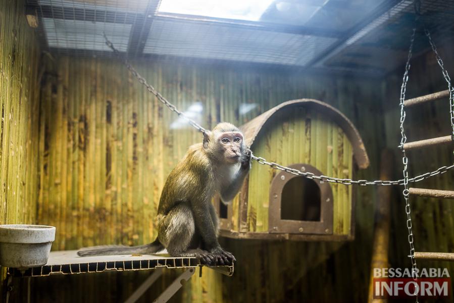 SME_7603 В Измаиле гостят карликовые обезьянки (фоторепортаж)