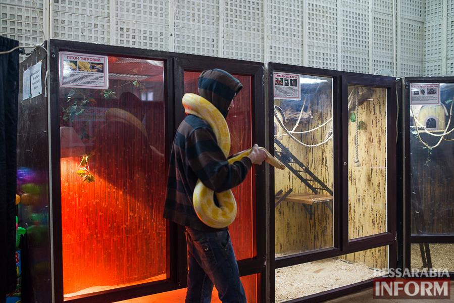 SME_7608 В Измаиле гостят карликовые обезьянки (фоторепортаж)