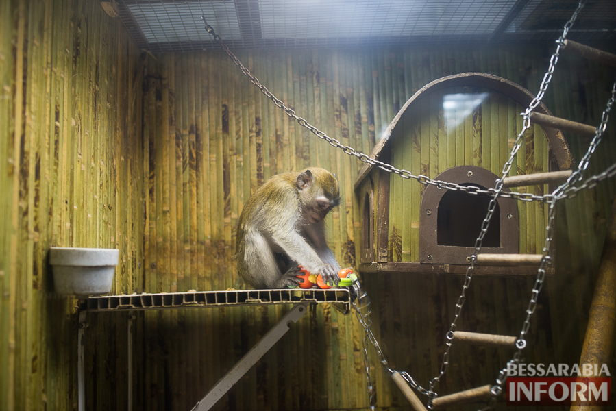 SME_7611 В Измаиле гостят карликовые обезьянки (фоторепортаж)