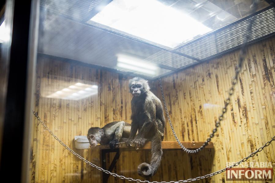 SME_7617 В Измаиле гостят карликовые обезьянки (фоторепортаж)