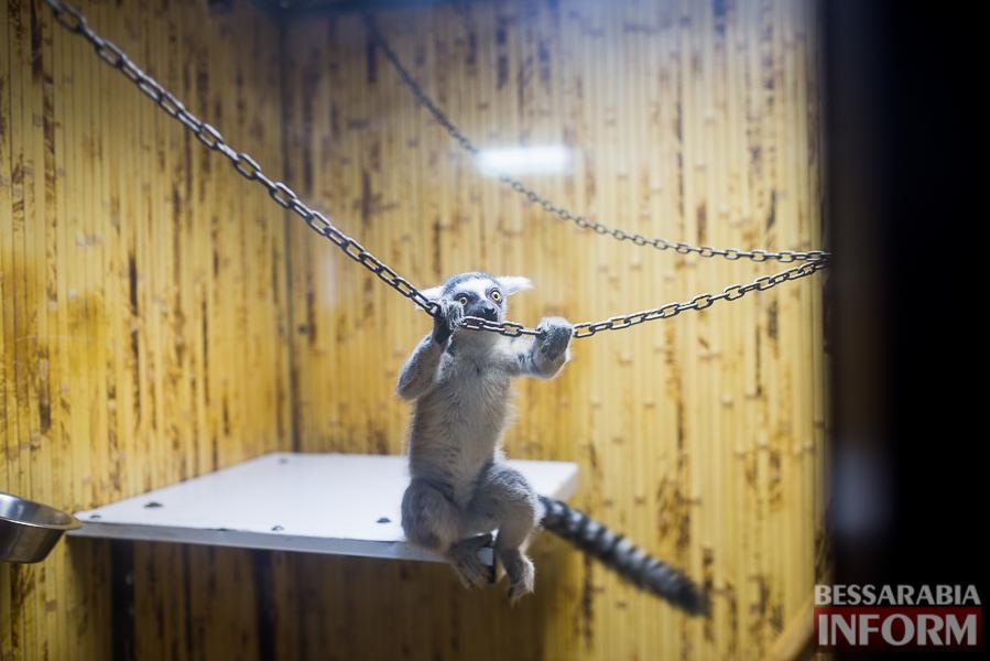 SME_7622 В Измаиле гостят карликовые обезьянки (фоторепортаж)
