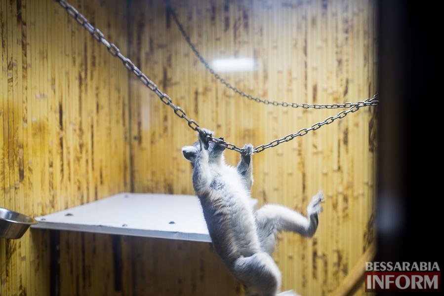 SME_7623 В Измаиле гостят карликовые обезьянки (фоторепортаж)