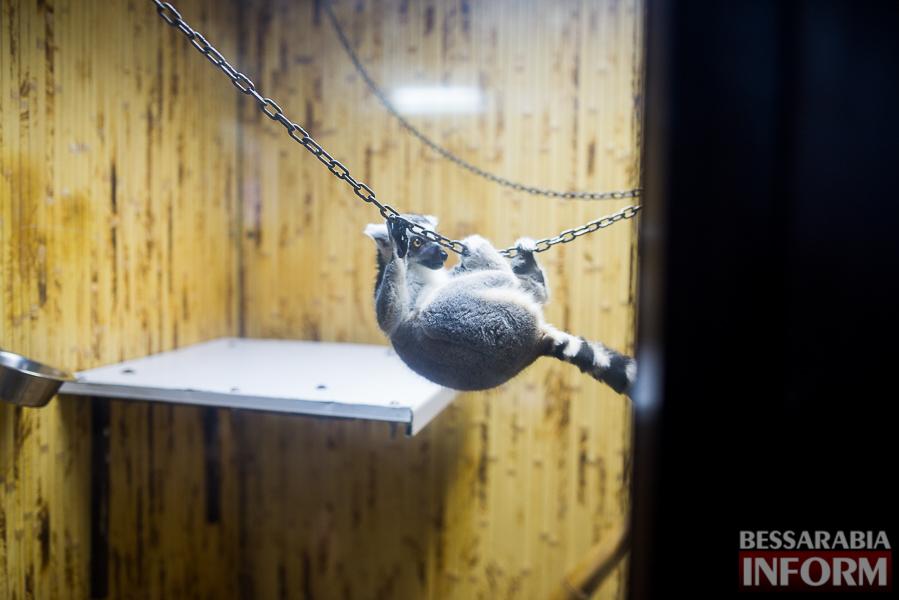 SME_7626 В Измаиле гостят карликовые обезьянки (фоторепортаж)