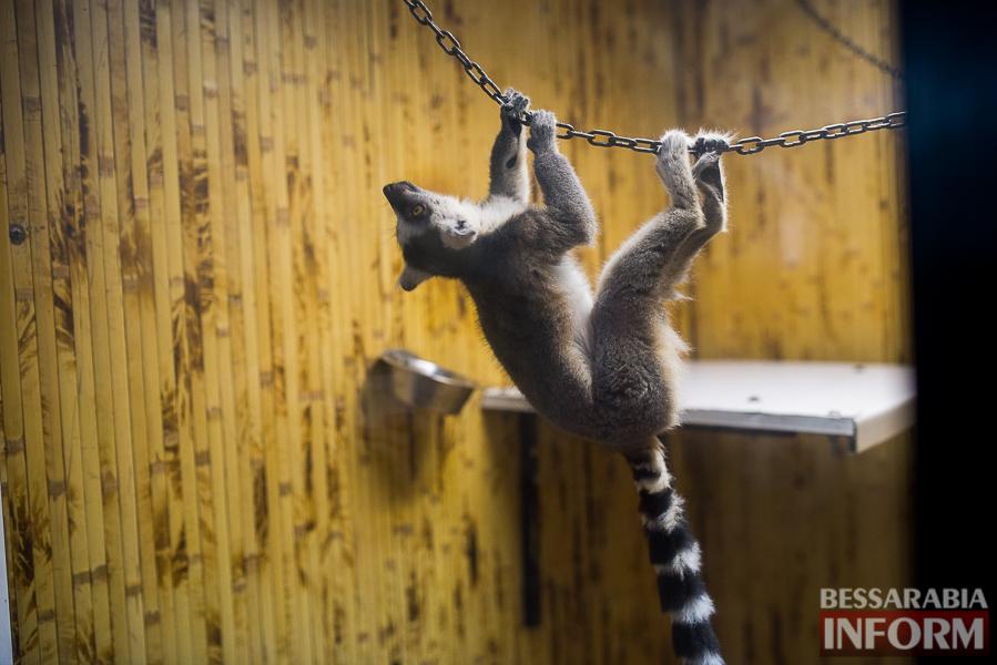 SME_7630 В Измаиле гостят карликовые обезьянки (фоторепортаж)