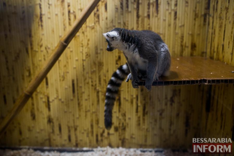 SME_7632 В Измаиле гостят карликовые обезьянки (фоторепортаж)