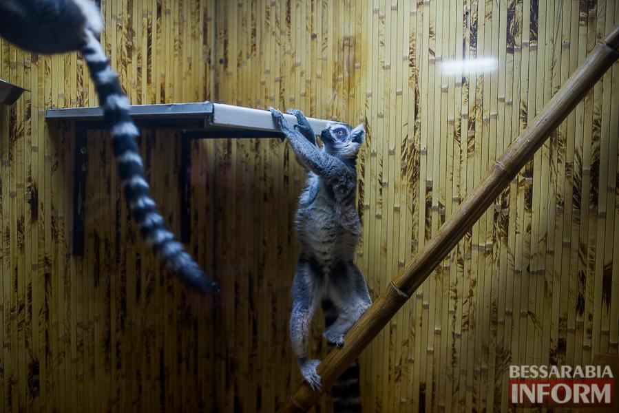 SME_7634 В Измаиле гостят карликовые обезьянки (фоторепортаж)