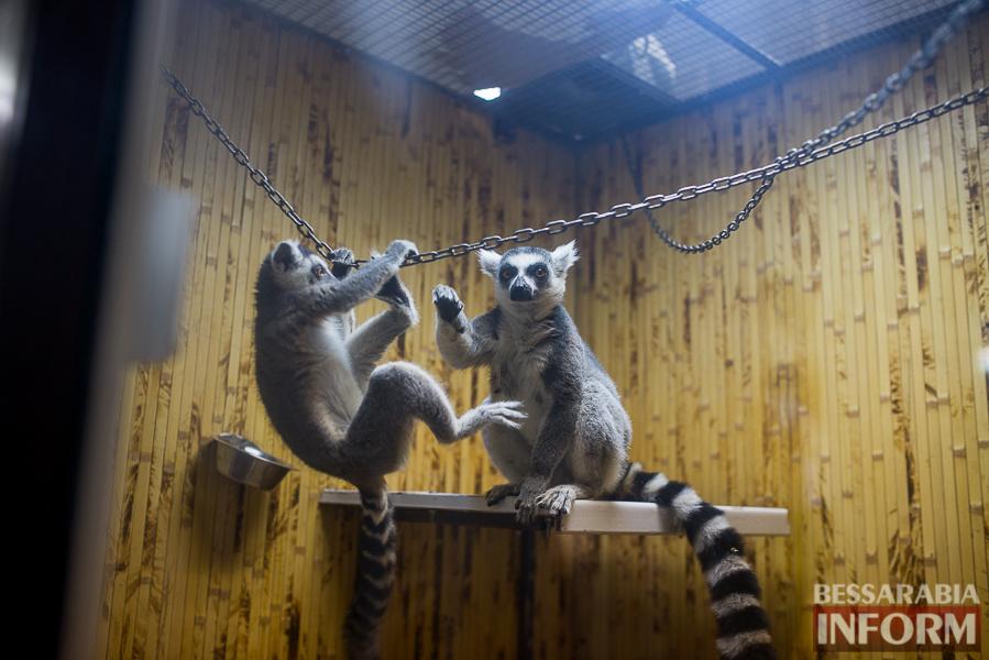 SME_7636 В Измаиле гостят карликовые обезьянки (фоторепортаж)