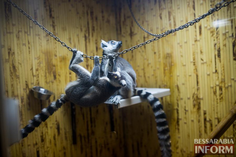 SME_7641 В Измаиле гостят карликовые обезьянки (фоторепортаж)