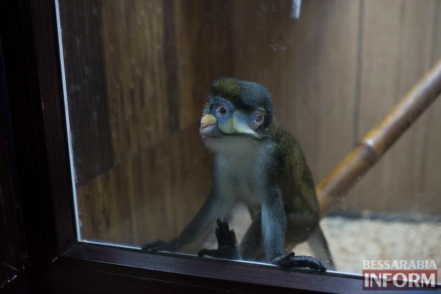 SME_7644 В Измаиле гостят карликовые обезьянки (фоторепортаж)