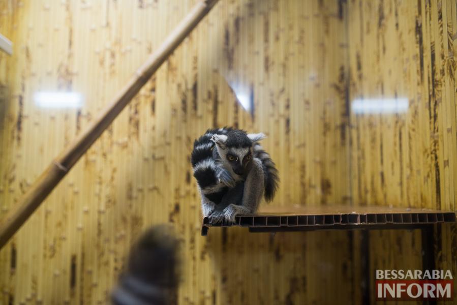 SME_7659 В Измаиле гостят карликовые обезьянки (фоторепортаж)
