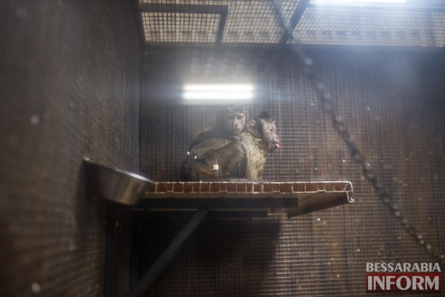 SME_7662 В Измаиле гостят карликовые обезьянки (фоторепортаж)