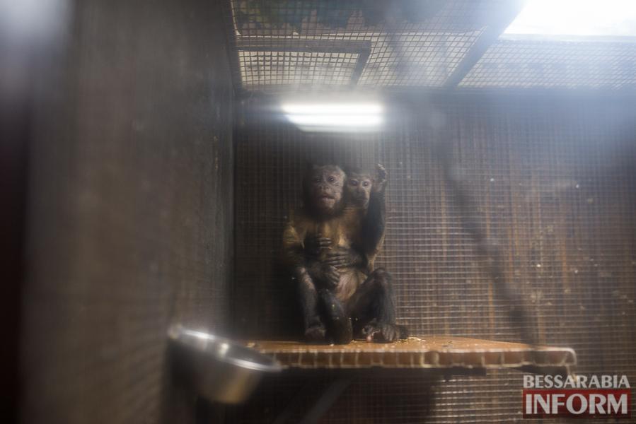 SME_7664 В Измаиле гостят карликовые обезьянки (фоторепортаж)