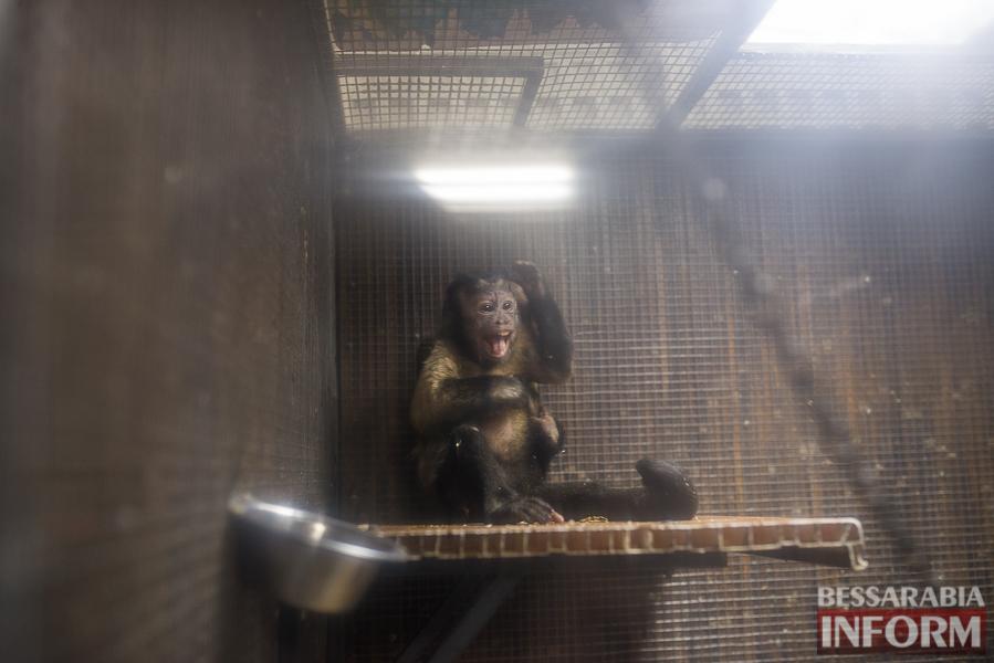 SME_7667 В Измаиле гостят карликовые обезьянки (фоторепортаж)