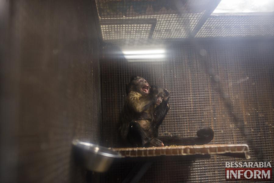 SME_7670 В Измаиле гостят карликовые обезьянки (фоторепортаж)