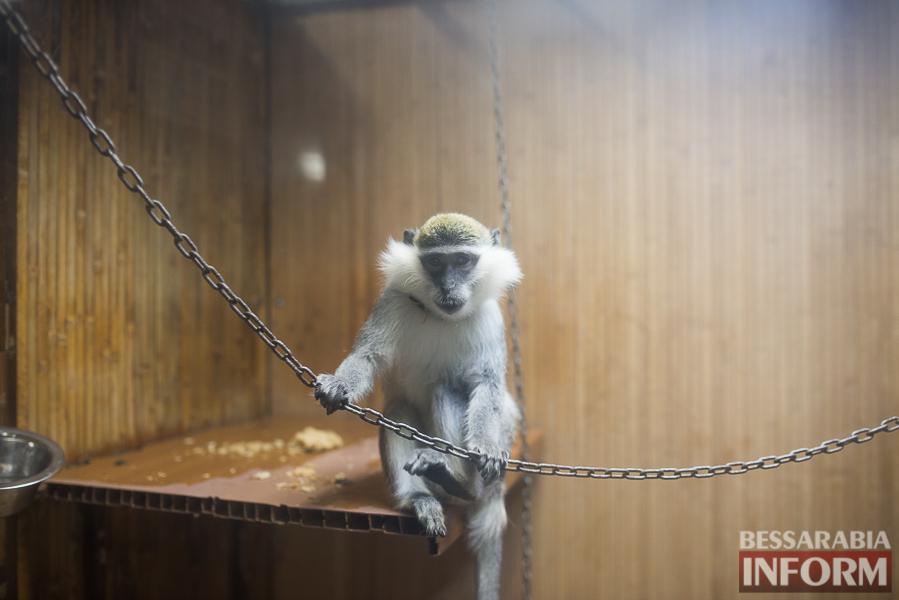 SME_7686 В Измаиле гостят карликовые обезьянки (фоторепортаж)