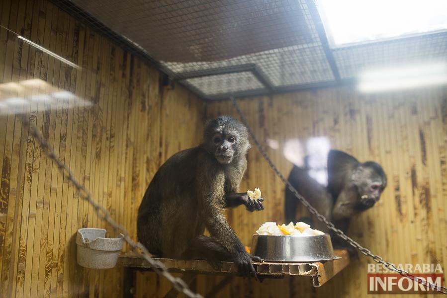 SME_7689 В Измаиле гостят карликовые обезьянки (фоторепортаж)