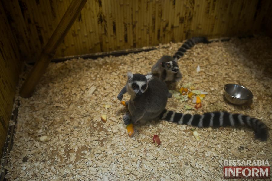 SME_7697 В Измаиле гостят карликовые обезьянки (фоторепортаж)