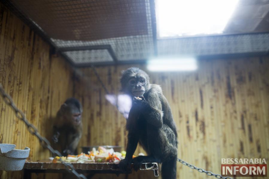 SME_7701 В Измаиле гостят карликовые обезьянки (фоторепортаж)