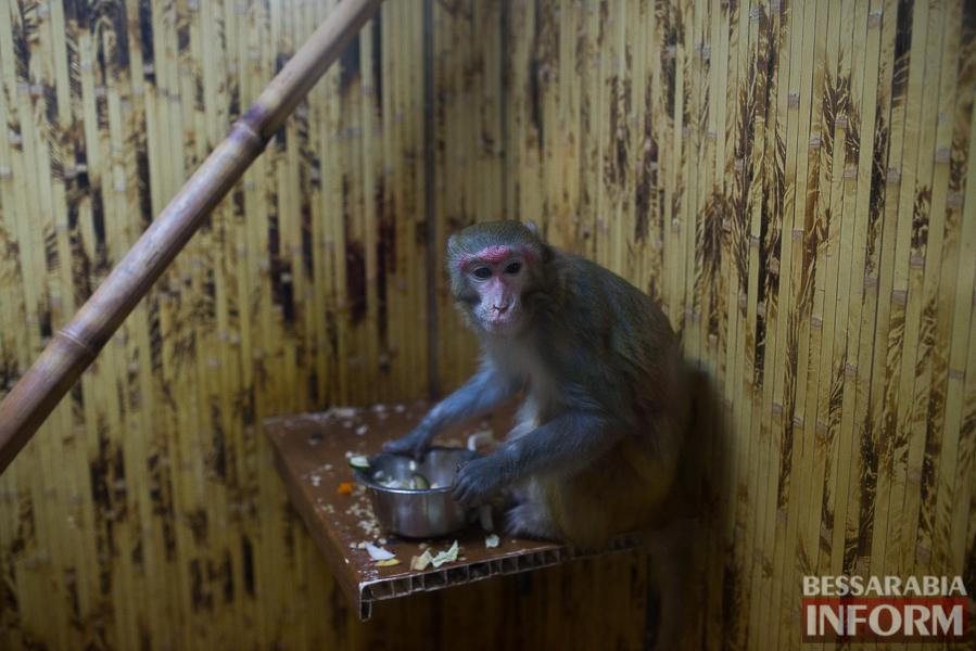 SME_7705 В Измаиле гостят карликовые обезьянки (фоторепортаж)