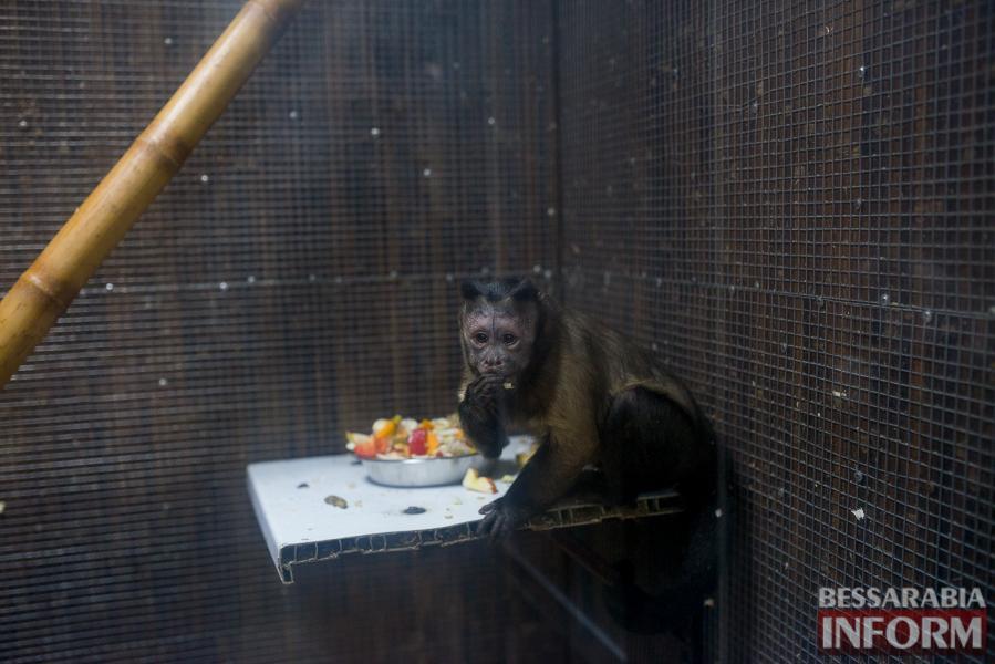 SME_7707 В Измаиле гостят карликовые обезьянки (фоторепортаж)
