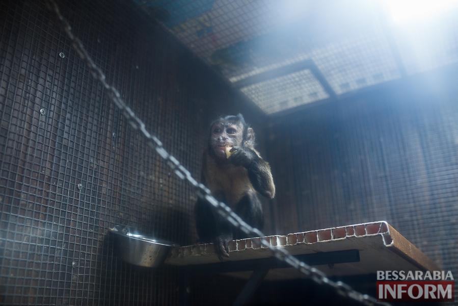 SME_7716 В Измаиле гостят карликовые обезьянки (фоторепортаж)