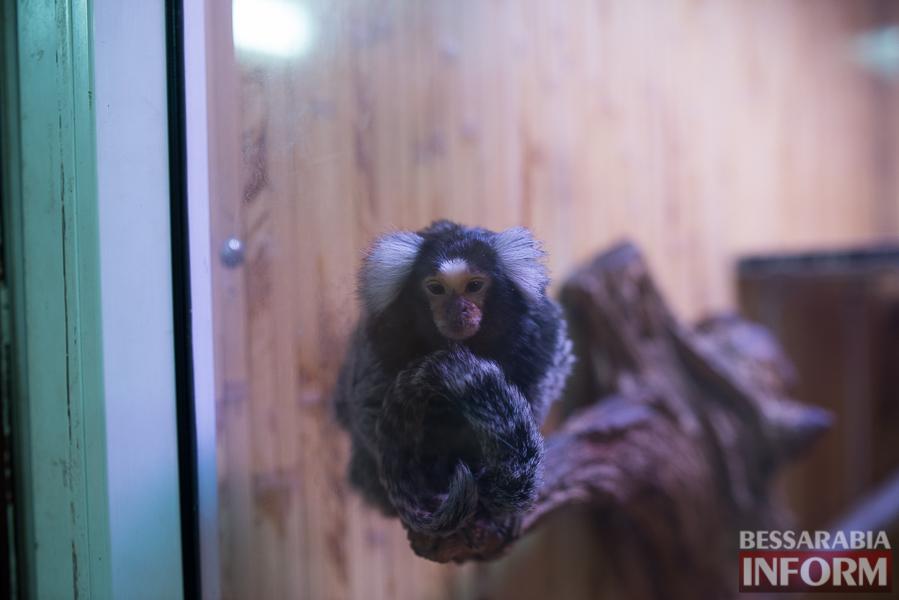 SME_7717 В Измаиле гостят карликовые обезьянки (фоторепортаж)