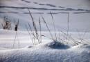 Снегопады и мороз: синоптик рассказал, какой погоды ждать украинцам в феврале