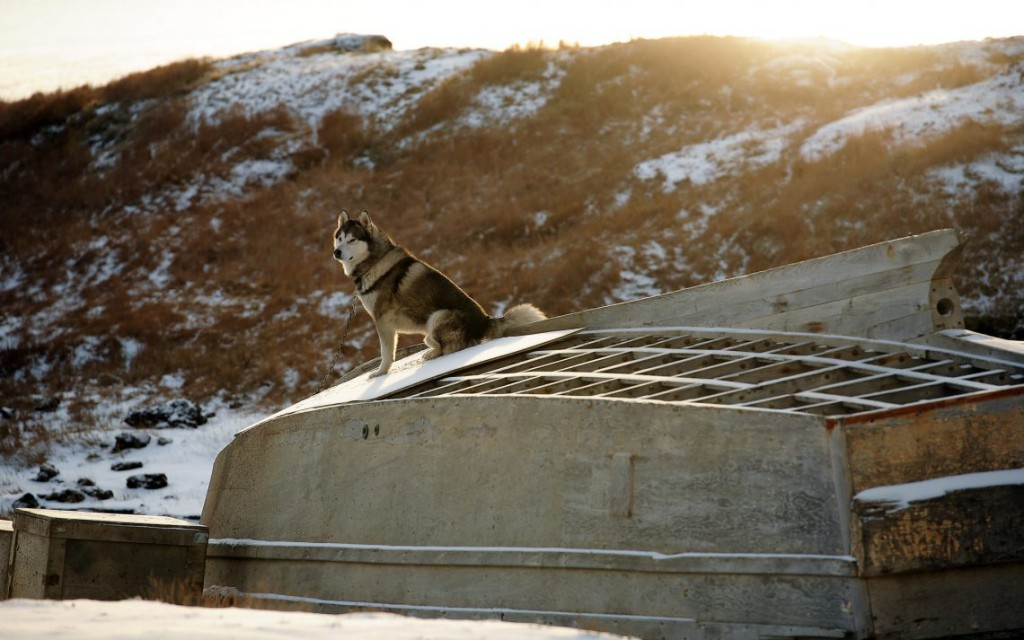37 Жизнь на Аляске. ФОТО