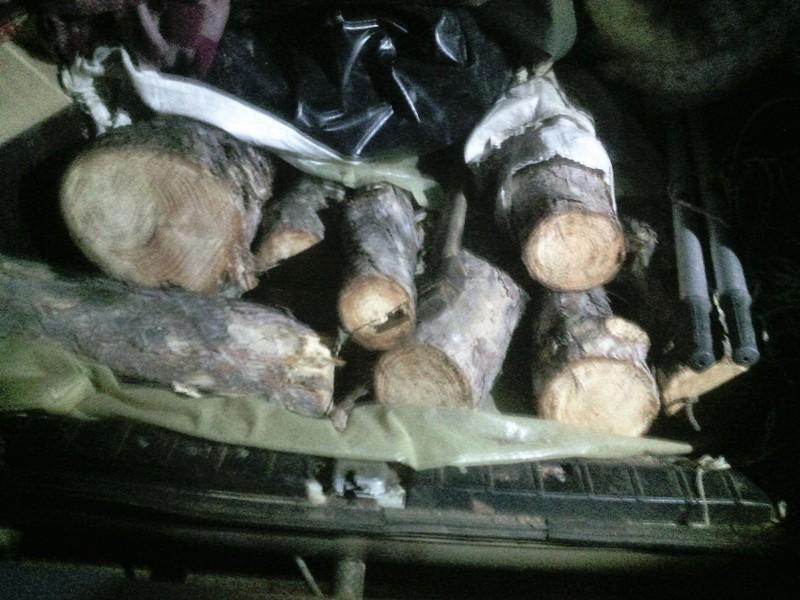 IMG_20160201_174804-2 Килийские правоохранители предотвратили незаконную вырубкулеса (фото)
