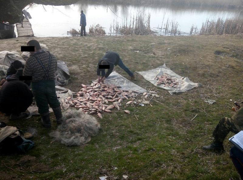 Пограничники Измаильского отряда задержали браконьеров, которые выловили почти тонну рыбы (фото)