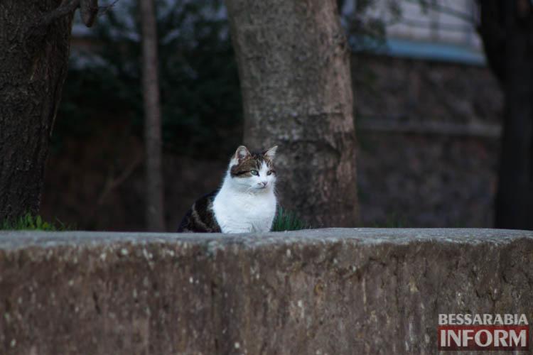 IMG_7801 В Измаиле запахло весной (фоторепортаж)