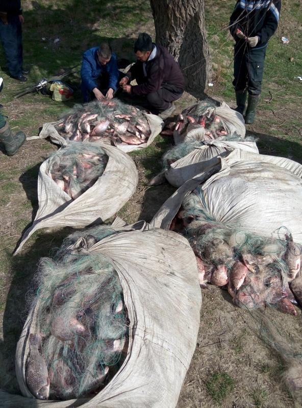 P60223-124948 Полиция совместно с пограничниками задержали браконьеров на озере Кугурлуй