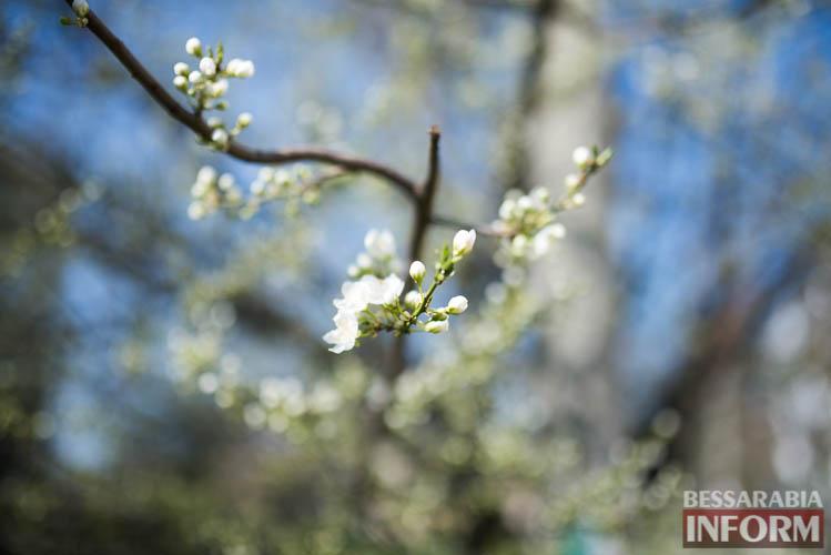 SME_1285 В Измаиле запахло весной (фоторепортаж)