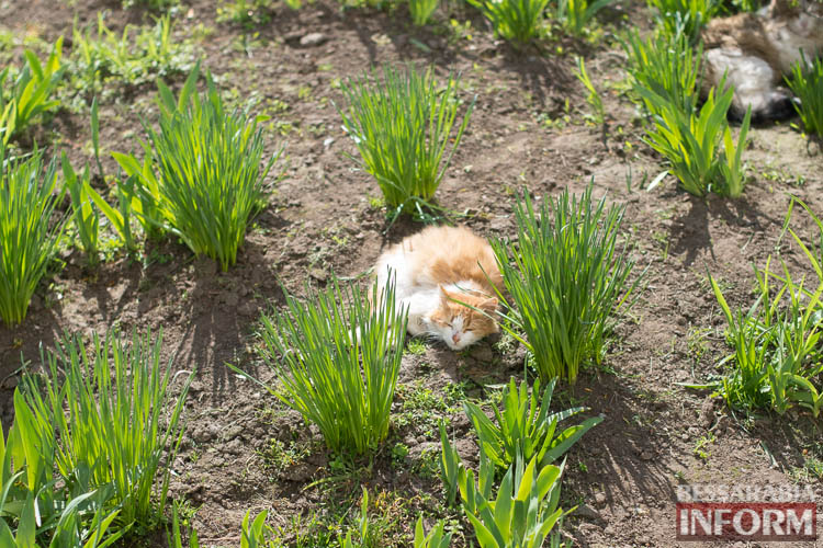 SME_1291 В Измаиле запахло весной (фоторепортаж)