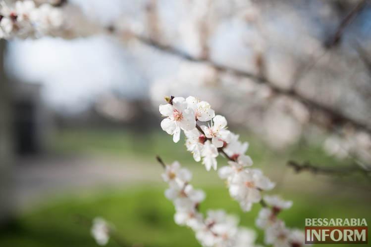 SME_1907 В Измаиле запахло весной (фоторепортаж)