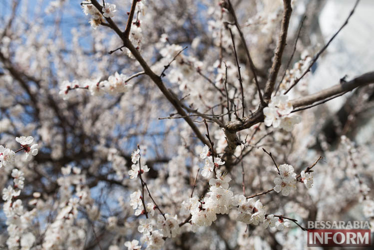 SME_1910 В Измаиле запахло весной (фоторепортаж)