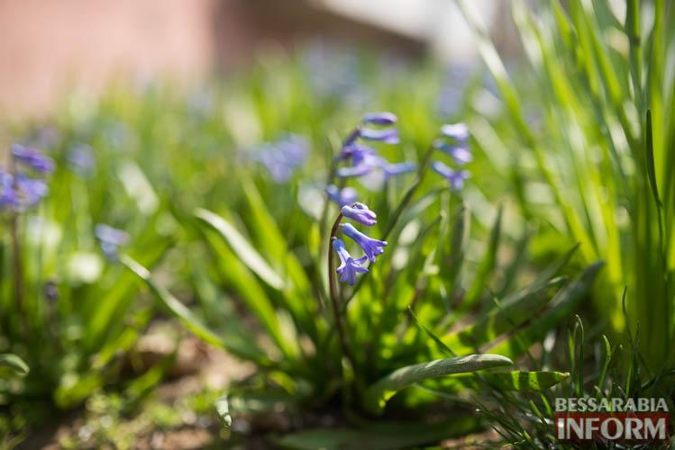 В Измаиле запахло весной (фоторепортаж)