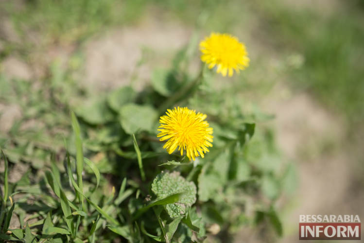 SME_1922 В Измаиле запахло весной (фоторепортаж)