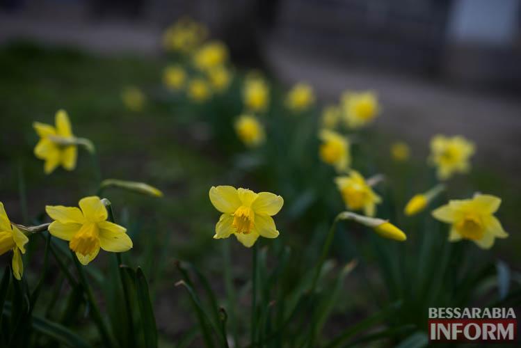 SME_1953 В Измаиле запахло весной (фоторепортаж)
