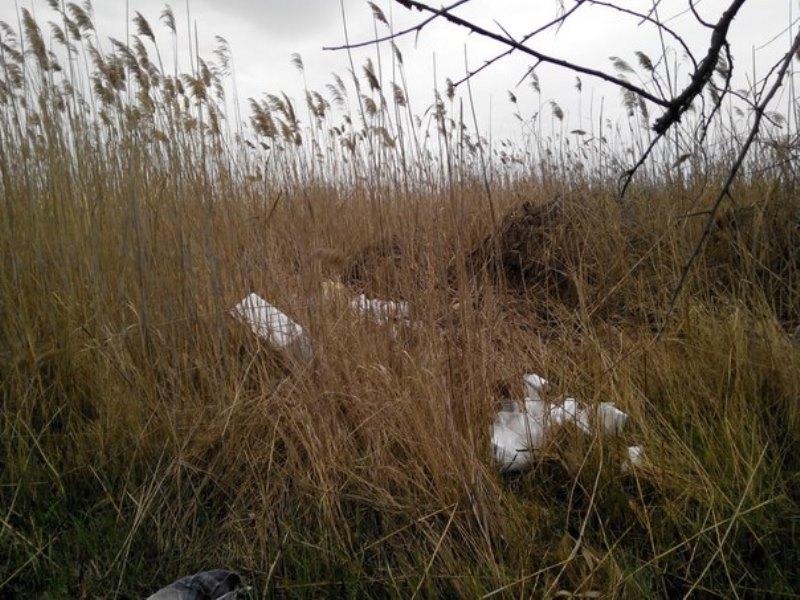 k5nZywe8GG8 Измаильчане обнаружили в плавнях Лебяжьего озера килограммы отравы (фото)