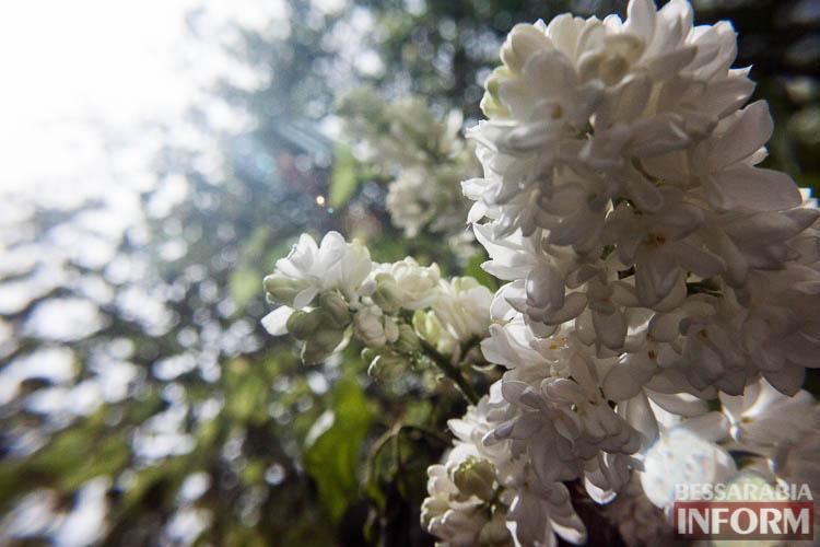 """IMG_0138 Это очень красиво: невероятные макроснимки от фотографа """"БессарабияINFORM"""""""