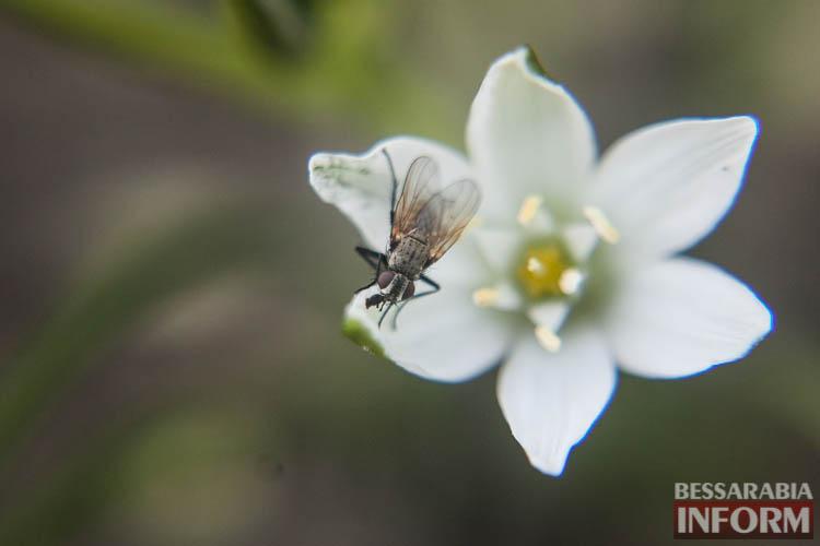 """IMG_9549 Это очень красиво: невероятные макроснимки от фотографа """"БессарабияINFORM"""""""